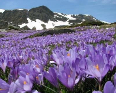 Болгария весной