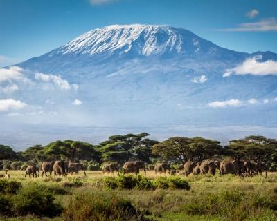 Отдых на Новогодние праздники в Танзанию